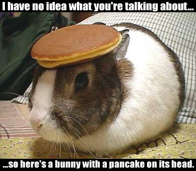 I have no idea what you're talking about... so here's a bunny with a pancake on its head.